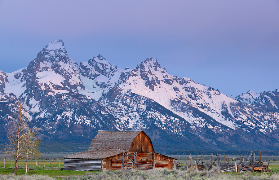 The purplish light of the early dawn paints the sky and Tetons behind the John Moulton Barn.