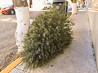 Querétaro, Querétaro. 5 de enero de 2016.- Un Árbol de navidad luce tirado en la calle después de haber servido como adorno en el mes pasado durante las festividades de la Navidad 2015.<br /> <br /> Como otras ocasiones expertos en ecología y conservación recomiendan que este tipo de accesorios festivos sean depositados en los centros de reciclaje o esperen el transporte de basura adecuado.<br /> <br /> Foto: Demian Chávez
