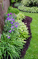 A suburban garden border grows along a neighbor's fence, Will County, Illinois
