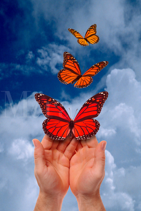 Digital illustration: hands with butterflies.