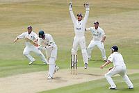Cricket 2010-07