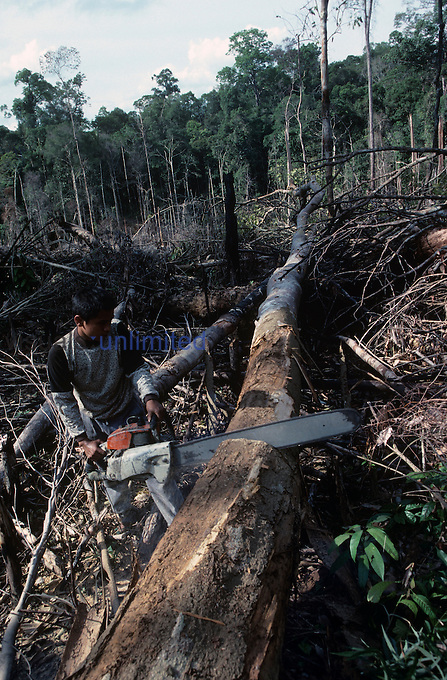 Indonesian Rainforest being clearcut, Jambi, Sumatra.