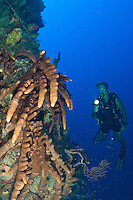 Sponge and diver .Vertigo in Annaly Bay.St. Croix, US Virgin Islands