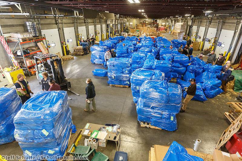 Getting ready for Iditarod 2016, bales of straw are stacked on pallets  at Airland Transport in Anchorage on Thursday February 11, 2016.  Nearly 1700 bales will be sent out to over 20 checkpoints along the trail. Iditarod 2016