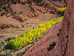 Band of Yellow: Cottonwoods in Canyon de Chelly