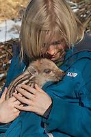 Wildschwein, Kind mit verwaistem Jungtier im winterlichen Garten, wird in menschlicher Obhut großgezogen, Jungtier wird von Hand aufgezogen, Aufzucht eines Wildtieres, Wild-Schwein, Schwarzwild, Schwarz-Wild, Frischling, Junges, Jungtier, Tierkind, Tierbaby, Tierbabies, Schwein, Sus scrofa, wild boar, pig