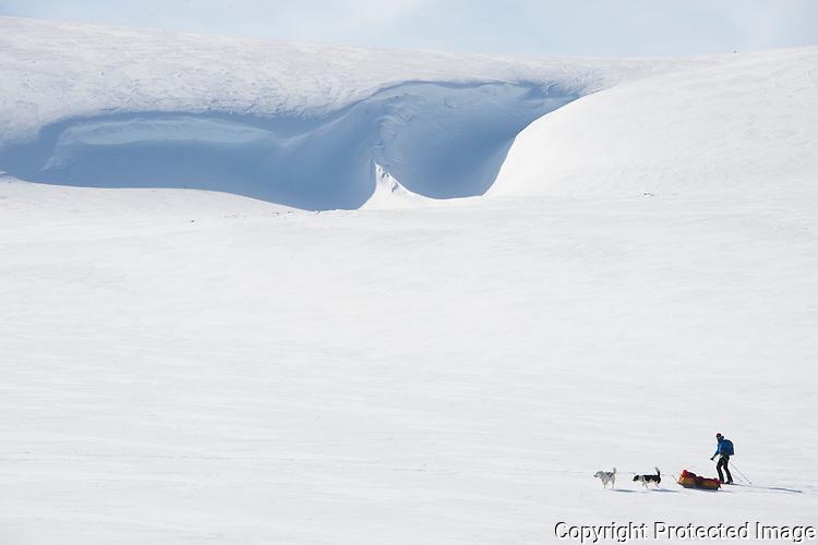 Skiløper med pulk og trekkhunder ved Skipskjølen på Varangerhalvøya. ---- Skier with dogs and sled on Varangerhalvøya.
