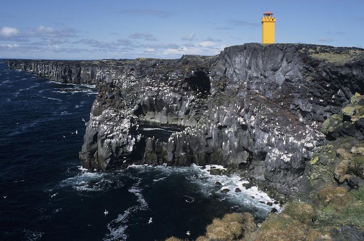 Seabird Cliffs, Iceland