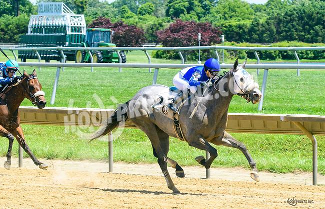 Rockaroundthedock winning at Delaware Park on 6/2417