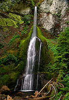 """Nature's Lace""<br />