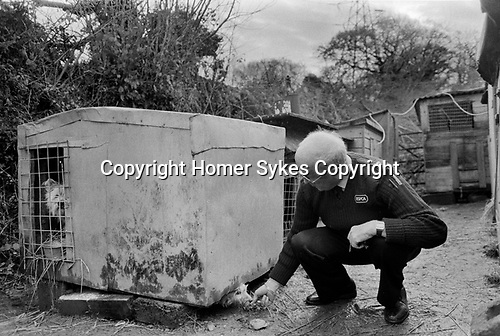 Puppy Farming Wales 1989. Two West Highland Whites - Westie's.<br />