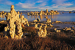 Mono Lake is a stopover point for over 2 million migratory birds that feed on the black fleis and brine shrimp that live in the lake. Formed about 760,000 years ago the lake has no outlet and consequently has built up a high saline concentration.