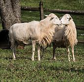 STAUBER FARM 2016