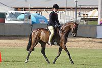 Pony Hack Gelding 12.2-14HH