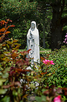 Rose garden with Blessed Mother statue.