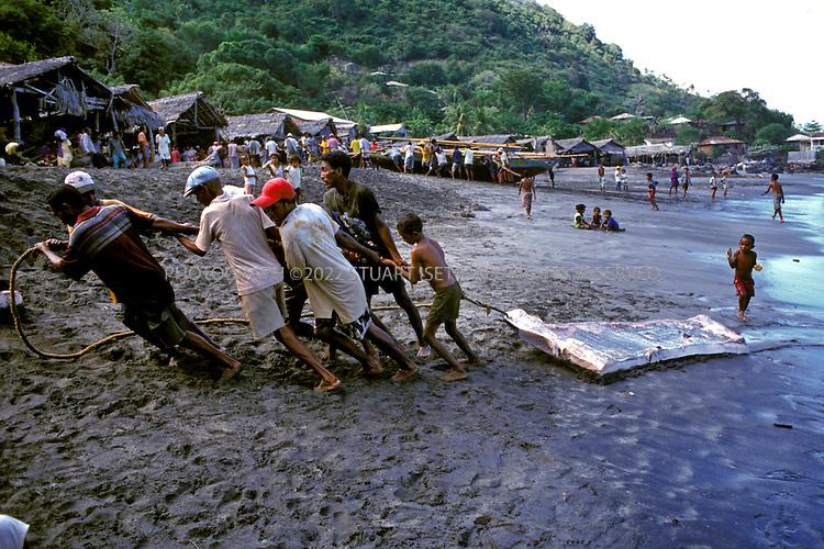Lamalera, Indonesia..Villagers tow a huge piece of sperm wahle blubber up the beach at Lamalera...Photograph by Stuart Isett.©2003 Stuart Isett