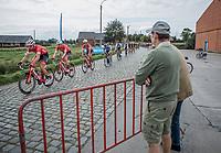 Peloton led by Team Trek-Segafredo over the cobbles<br /> <br /> 103th Kampioenschap van Vlaanderen 2018 (UCI 1.1)<br /> Koolskamp &ndash; Koolskamp (186km)