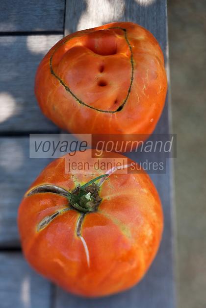 Europe/France/Provence-Alpes-Côte d'Azur/13/Bouches-du-Rhône/Env d'Arles/Le Sambuc: Tomates du potager bio du Restaurant Bio: La Chassagnette
