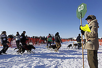 "Sunday, March 4, 2012  Maryann Capps holds a ""Stop/Go"" sign at the restart of Iditarod 2012 in Willow, Alaska."