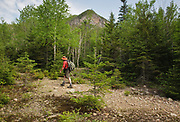 Hikers on the Timber Camp Trail in Livermore, New Hampshire; part of the White Mountains. This area was logged during the Mad River Logging Era.