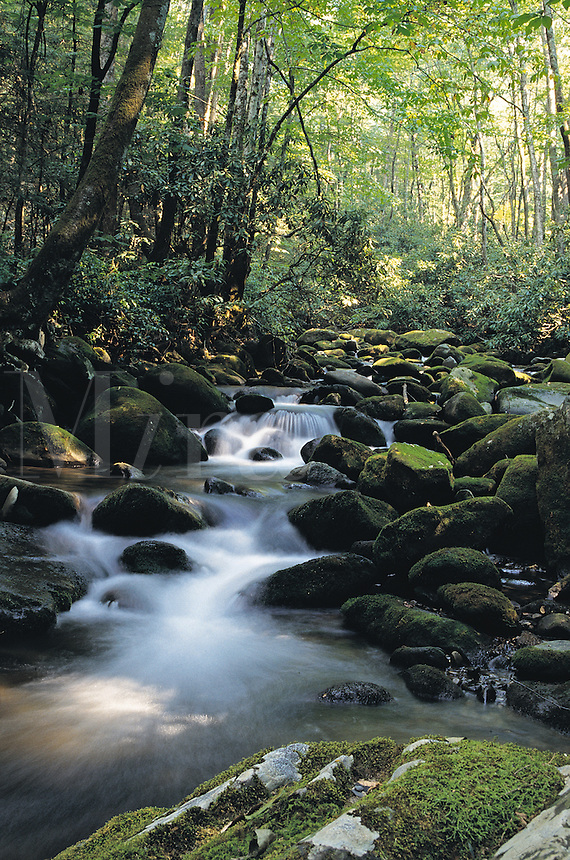Scenic view of a forest in summer with a white mountain stream rushing past moss covered rocks.