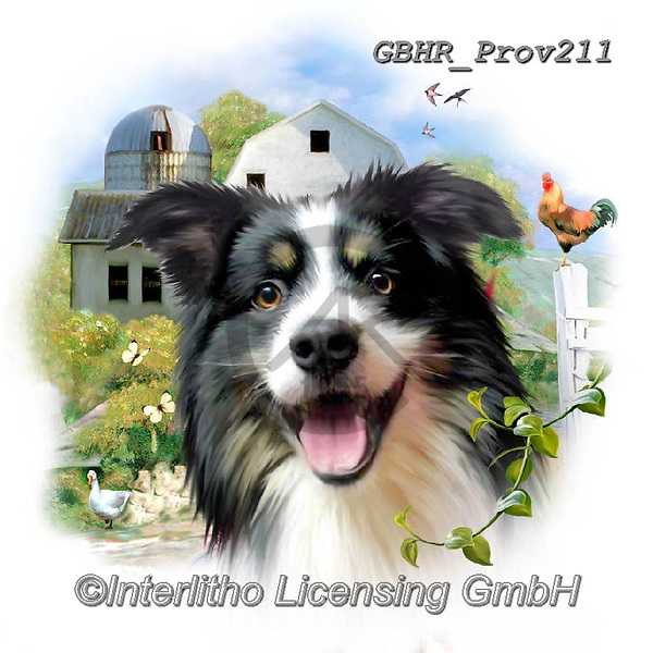 Howard, REALISTIC ANIMALS, REALISTISCHE TIERE, ANIMALES REALISTICOS, paintings+++++Border Collie,GBHRPROV211,#a#, EVERYDAY ,selfies