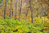 Autumn woods detail, Connecticut, CT