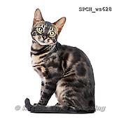 Xavier, ANIMALS, REALISTISCHE TIERE, ANIMALES REALISTICOS, FONDLESS, photos+++++,SPCHWS628,#A#