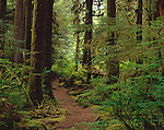 Olympic National Park, WA:  A trail sheltered by the dense forest canopy leads to the Sol Duc River near the Salmon Cascades