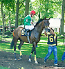Chick's Dig Bodie before The Longines Gentlemans International Fegentri race at Delaware Park on 9/14/15 - Mr. Antonnio Ferramosca aboard