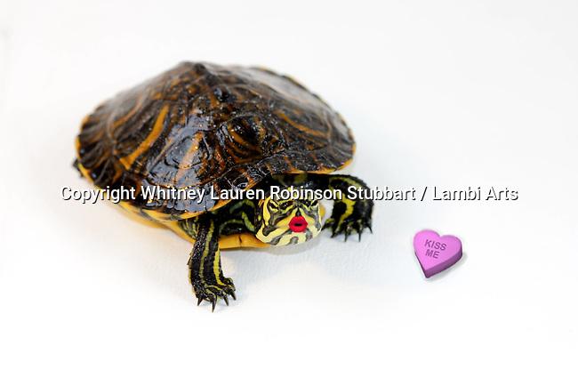 Valentines Animal Photos