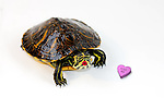 Valentines Animal Photos