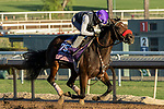 ARCADIA, CA  OCTOBER 25: Breeders' Cup Juvenile Fillies entrant Lazy Daisy, trained by Doug F. O'Neill, exercises in preparation for the Breeders' Cup World Championships at Santa Anita Park in Arcadia, California on October 25, 2019.  (Photo by Casey Phillips/Eclipse Sportswire/CSM)