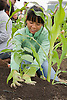 Featured Alternative Agriculture Stock Photos - Organic Farming, Organic Produce, & Pest Control