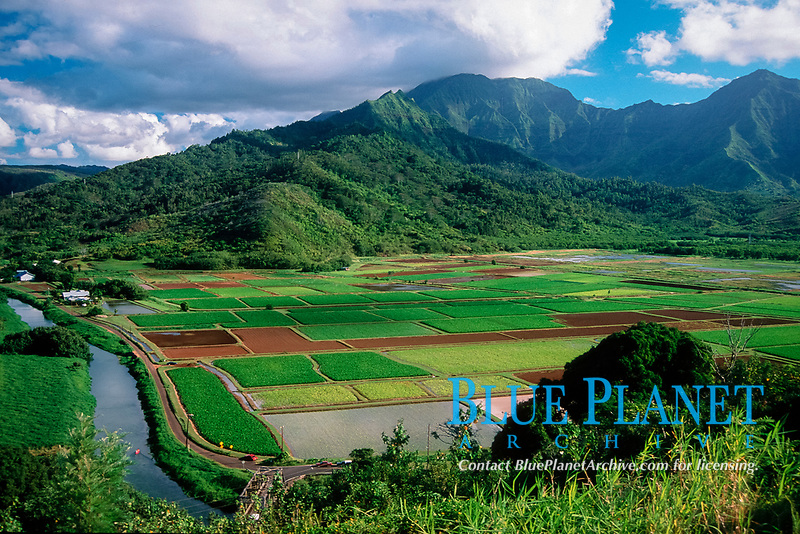 taro plantations, Kauai, Hawaii, North Pacific Ocean
