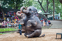 Elephant display at Colombo Zoo, Sri Lanka.