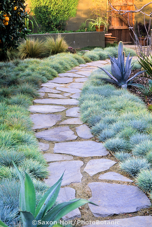 Flagstone path in small S. CA. backyard garden with orange tree, cactus and bunch grass lawn