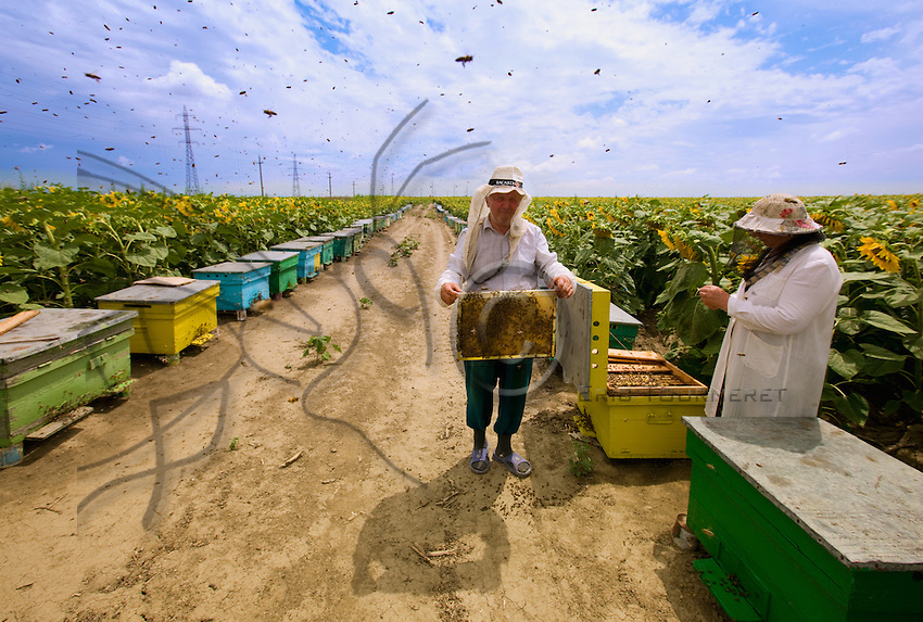 """Mirca and Tinca Dumitru, 64 and 61 years old, from Braila, worked all their lives in a factory. Before retiring, they built up their stock of hives and made a """"lodge"""". Today, they own nearly 200 hives but do not migrate any farther than the sunflower fields on the peninsula of Braïla, a few kilometers from their apartment. For them, beekeeping is more than just a supplement to their pensions."""