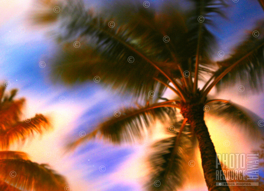 Looking up at a palm tree with clouds and stars in the background, Palm fronds blurred from blowing in the wind.
