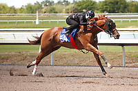 #54Fasig-Tipton Florida Sale,Under Tack Show. Palm Meadows Florida 03-23-2012 Arron Haggart/Eclipse Sportswire.