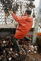 """Europe/France/Bretagne/22/Côtes d'Armor/Erquy: Pecheurs - pêche à la coquille Saint Jacques sur le bateau """"arc en ciel"""""""