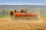 Nippenose Valley. Amishman seeding with four horse team.