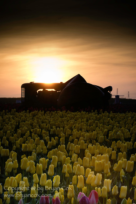 Tulips, Tractor, and Windmill, Wooden Shoe Tulip Farm, Oregon
