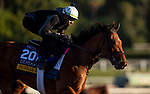 OCT 29: Breeders' Cup Distaff entrant Dunbar Road, trained by Chad C. Brown, gallops at Santa Anita Park in Arcadia, California on Oct 29, 2019. Evers/Eclipse Sportswire/Breeders' Cup