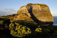 Felsen Morro de Castel Branco auf der Insel Faial, Azoren, Portugal