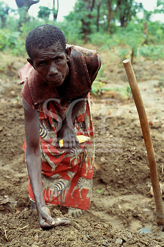 Lukulu, Zambia; old woman in ragged dress planting maize straight from the cob in poor soil.