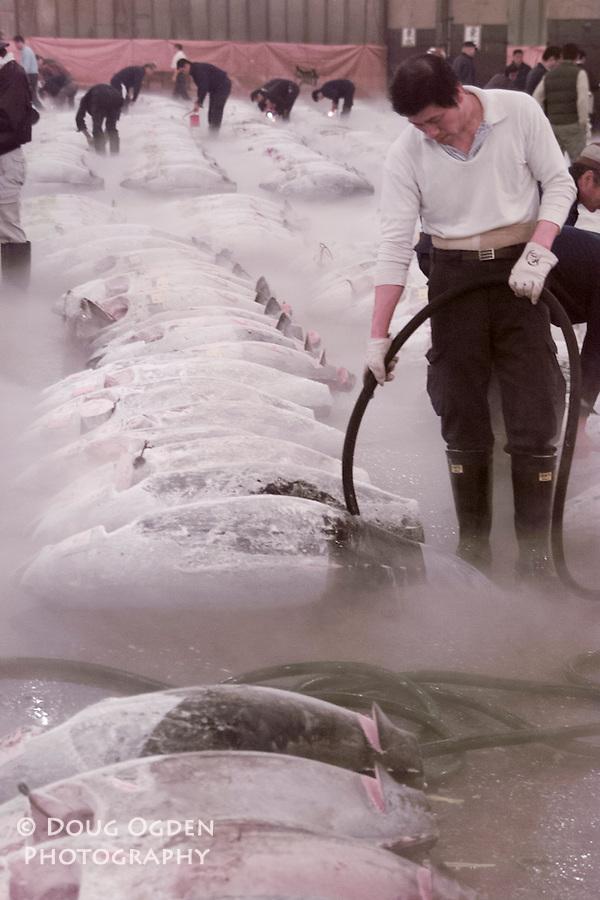 Frozen Tuna being prepared for auction, Tsukiji fish market, Tokyo Japan