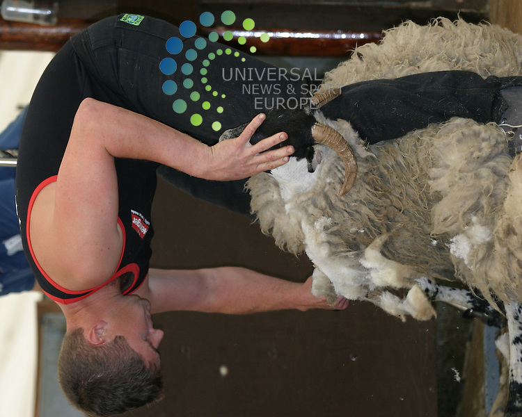 Ace shearer Gavin Mutch , ex Aberdeenshire and now New Zealand gets to grips with this blackface ewe at the Scottish Blackface Shearing competition at Loch Earn sun 4th of July 2010, Gavin won the open competition and also the open at the Royal Highland Show Edinburgh , Gavin with fellow shearer Hamish Mitchell have been chosen to represent Scotland at the world championships at the Royal Welsh Show at the end of July The competition runs for two days with the heats on the first day and the finals on the second day, annual event which is usually the weekend after the Royal Highland Show....Universal News and Sport (Europe).All pictures must be credited to  www.universalnewsandsport.com. (0ffice).0844 884 51 22