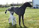 03/05/16 <br />