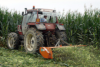 - Destruction of  corn fields in which  have been found percentages of OGM  (genetically modified) seeds....- Distruzione di campi di mais in cui sono state trovate percentuali di sementi OGM (geneticamente modificate)
